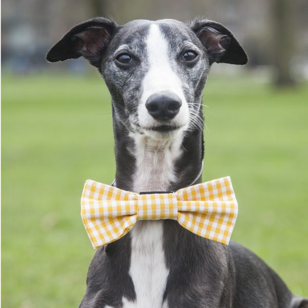Yellow Gingham Bow Tie