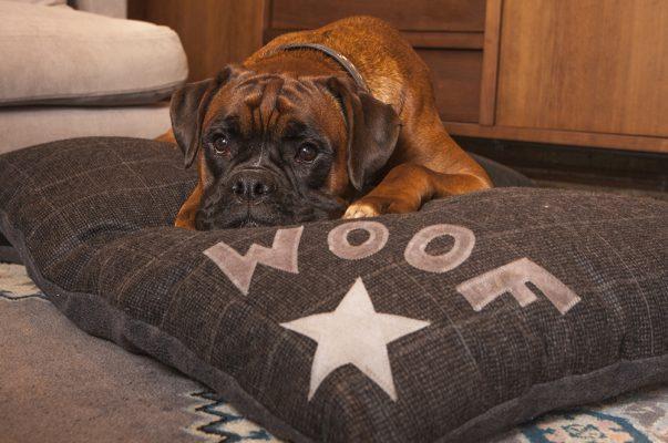 Dog Doza - 3 STAR - DENIM