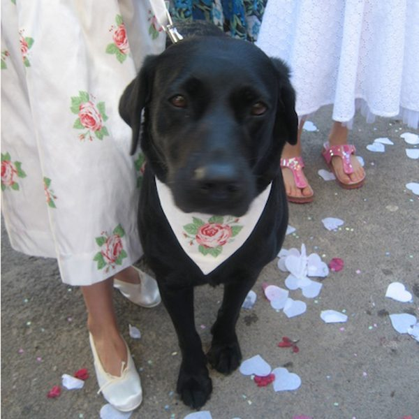 Wedding Collars