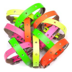 Disco Dog Collars & Leads