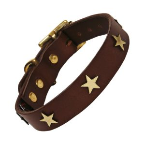 Classic Studded Dog Collar - Brass Stars on Chocolate Leather