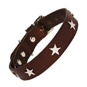 Chocolate collar silver star leather