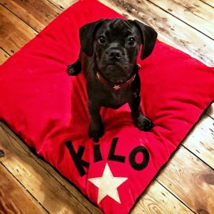 Bespoke Dog Doza KILO