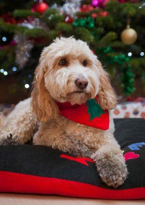Christmas Doggy Bandana